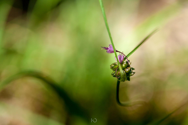 photo macro d'une fleur violette